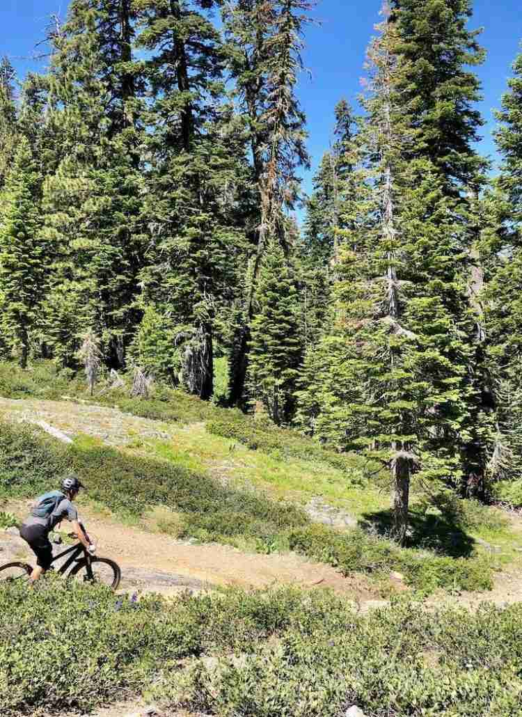 Learn everything you need to know about mountain biking the Downieville Downhill trail including how to shuttle, what to expect, and more!