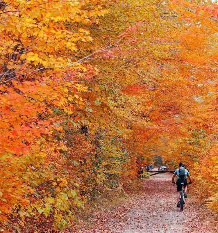 https://www.twowheeledwanderer.com/posts/kingdom-trails-complete-mountain-biking-guide